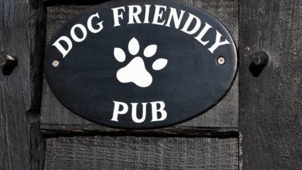 Photo of Dog Friendly
