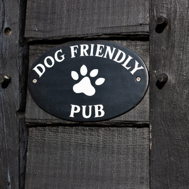 Image for Dog Friendly